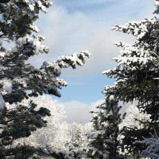 Back Yard Sky: Spring Snow colorway