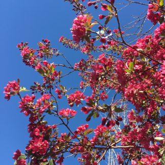 Crabapple Sky colorway