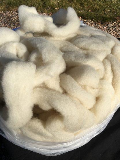 white shetland wool roving