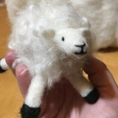 needle felted curly sheep kit